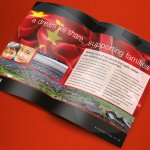dreams Investor Brochure
